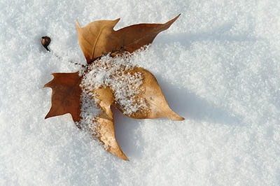 wintergolfcartuses.jpg